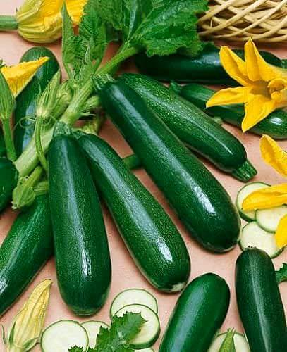 Zucchini Black Beauty - Kürbis - 20 Samen