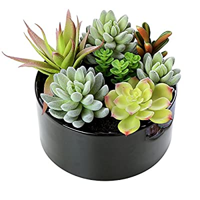 Decorative Faux Potted Succulents / Artificial Plant in 6 Inch Glazed Round Ceramic Flower Pot