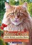 Maine Coon - Wilde Schale weicher Kern: Vom Charakter bis zur Farbvererbung (Katzen)