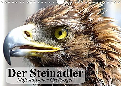 Der Steinadler. Majestätischer Greifvogel (Wandkalender 2022 DIN A4 quer)