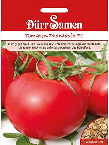 Tomate Stabtomate Phantasia F1 krautfäuleresistent
