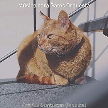 Gatitos Suntuosa (Musica)