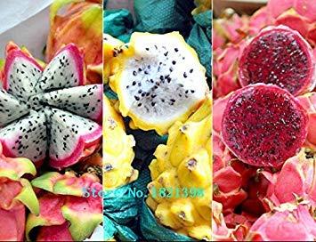 100pcs Paquet Red Chair Dragon Fruit Graines, par sac vert Graines de légumes Graines Pitaya