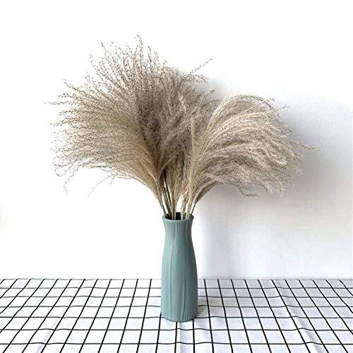 20st kleine pampa's gras gedroogd natuurlijke phragmites bloemen boeketten Bevat gekleurde plastic vaas Home decor bruiloft decor, 20st met vaas, S