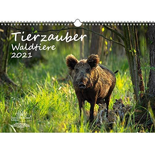Tierzauber Waldtiere DIN A3 Kalender für 2021 Tiere im Wald - Geschenkset Inhalt: 1x Kalender, 1x Weihnachtskarte (insgesamt 2 Teile)