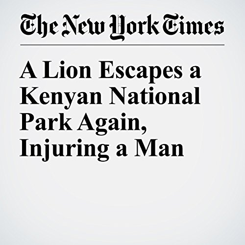 A Lion Escapes a Kenyan National Park Again, Injuring a Man audiobook cover art
