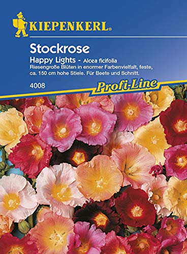 Stockrose Happy Lights