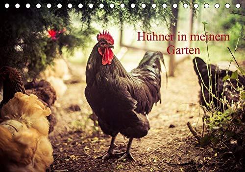 Hühner in meinem Garten (Tischkalender 2020 DIN A5 quer): professionelle Hühnerfotos (Monatskalender, 14 Seiten ) (CALVENDO Tiere)