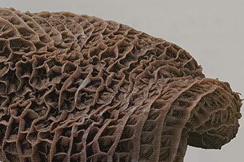 黒毛和牛 国産交雑牛 ハチノス 約0.8g×12P 真空 冷凍 業務用