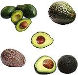 10 pezzi Avocado Semi per giardino all'aperto piantare buccia verde decorativo cortile semi di frutta perenne sani maturi in estate