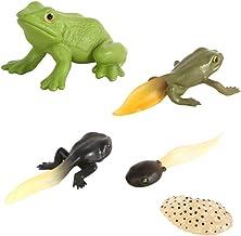 NUOBESTY Kit de Cycle de Vie Animal Cycle de Vie de Grenouille Figurine d'apprentissage Jouets Éducatifs pour Les Tout-Petits Enfants Enfants