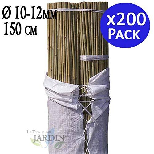 TUTOR DE BAMBU 150 cm, diámetro 10-12 mm. Uso agrícola para sujetar árboles, plantas y hortalizas. Pack ahorro de 200 Cañas de bambú