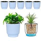 MOHENA Macetas de riego automático de 15cm con Cuerda Contton para Plantas de Interior, macetas de plástico para Todas Las Plantas de la casa, Flores, violetas africanas, Paquete Azul de 6