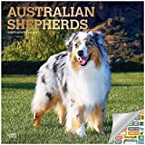 Australian Shepherds Kalender 2020 Set – Deluxe 2020 Australian Shepherds Wandkalender mit über 100 Kalenderaufklebern (Ausssie Geschenke, Bürobedarf)