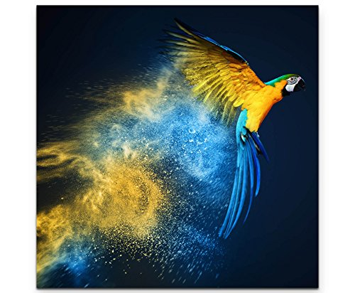 Paul Sinus Art Leinwandbilder   Bilder Leinwand 60x60cm Fliegender Ara über bunter Pulverexplosion