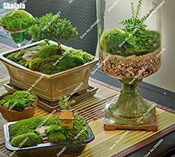 200 stücke Interessante Bonsai moos samen Nette Moos Kugel Dekorative Grassamen Zierpflanze DIY Hausgarten-anlagen gemischt