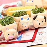 100/lot 2015DIY Mini otoboke Süße Tier grün Pflanzen Bonsai mit Keramik Pflanzen Topf Clover Samen für Büro Schreibtisch Dekoration Samen