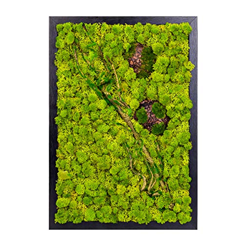 LVZHIHUAN Moss Wall Decor Real Preserved Reindeer Moss No Maintenance Required Eco Natural Green Wall Art Moss Frame Living Plants Vertical Garden 19.7 x13.8inch,Black Frame