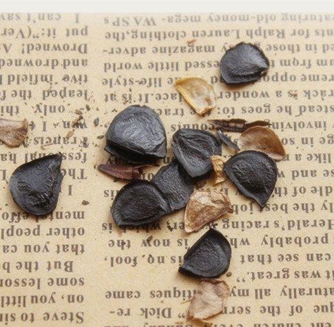 Big Promotion! 100 Pcs / Paquet d'arbre de myrtille Graine Fruit Myrtille semences pot Bonsaï Graines, # 034TNA
