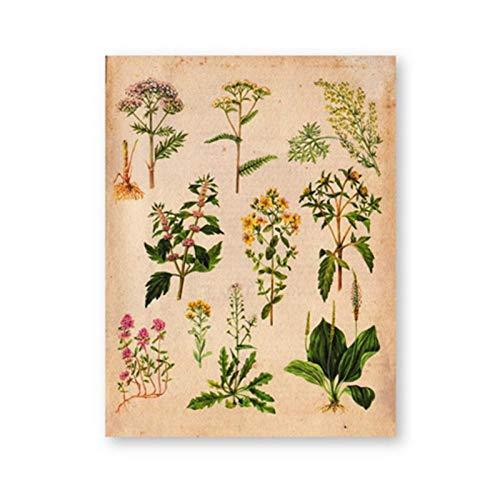 Terilizi geneeskrachtige planten vintage print muurkunst afbeelding decor botaniek illustratie schilderij schilderij schilderij wanddecoraties-21X30cm geen lijst
