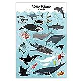 Meerestiere Poster Unter Wasser ist was los! (61cm x