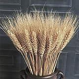 Seca hierba de trigo Ramo secado de hierba de trigo Bundle Natural Artificial trigo flores secadas real trigo oído de la falsificación ramo de las flores de bricolaje central de la flor disposición