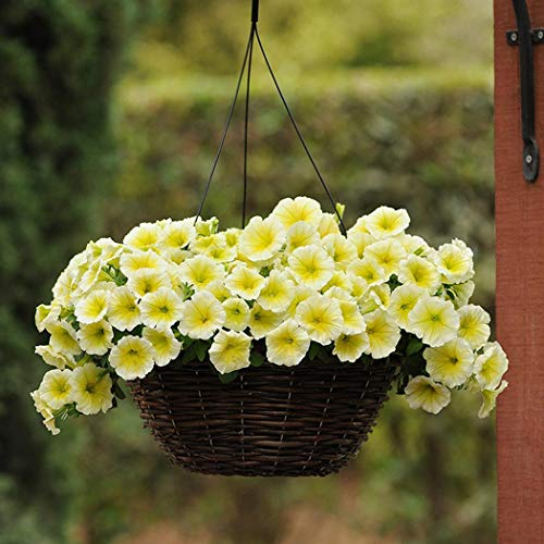 Tomasa Samenhaus-100pcs Rare Petunien Blumensamen gemischte Farben Blume Staude Bonsai mehrjährig winterhart Leuchten Ihren Garten