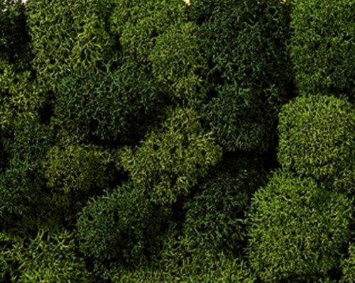 NOCH 08621 - Dekormoos, hell und Sortiert, dunkelgrün
