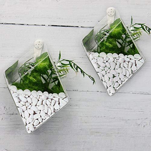 Terrario colgante de cristal en forma de diamante - Juego de 2 | Jardinera de vidrio de pared | Soporte de plantas colgante | 2 ganchos de suspensión invisible | M&W