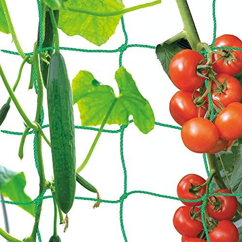 Premium Ranknetz mit großer Maschenweite für den perfekten Wachstum von Tomaten, Gurken und Kletterpflanzen Das Optimale Rankhilfe Netz für Garten und Gewächshaus - Maschnweite (10cm), Größe: 1 x 2m