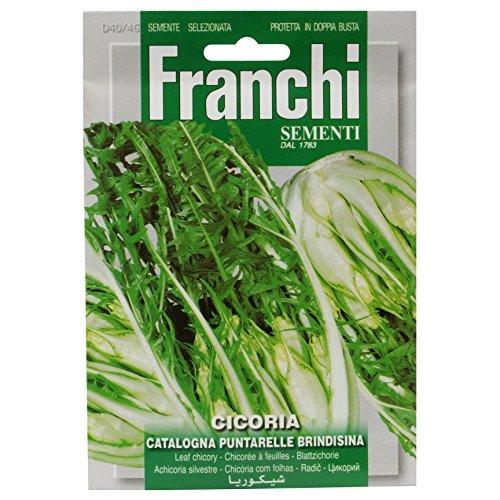Franchi Samen Chicorée Puntarelle of Brindisi