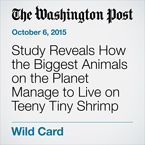 Study Reveals How the Biggest Animals on the Planet Manage to Live on Teeny Tiny Shrimp audiobook cover art