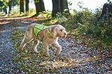 Hunde Warnweste von Hunter