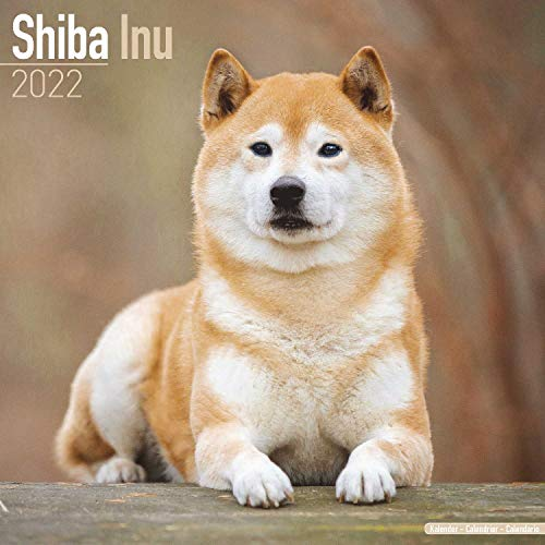 Shiba Inu 2022 - 16-Monatskalender: Original Avonside-Kalender [Mehrsprachig] [Kalender]: Original BrownTrout-Kalender [Mehrsprachig] [Kalender] (Wall-Kalender)