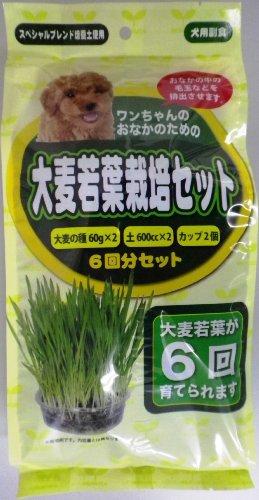 アラタ わんちゃん 大麦若葉栽培セット 6回分