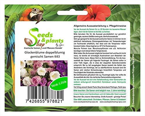 Stk - 1250x Glockenblume doppelblumig gemischt- Samen Pflanze Blumen Garten K43 - Seeds Plants Shop Samenbank Pfullingen Patrik Ipsa
