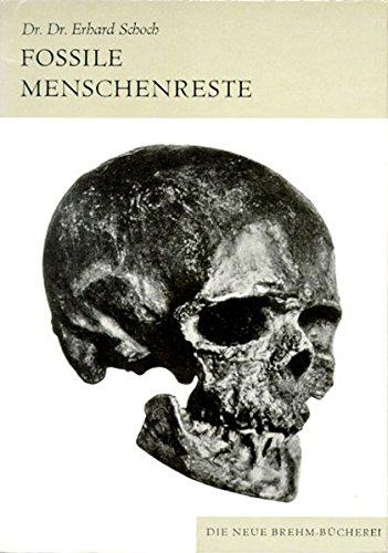 Fossile Menschenreste: Der Weg zum Homo sapiens