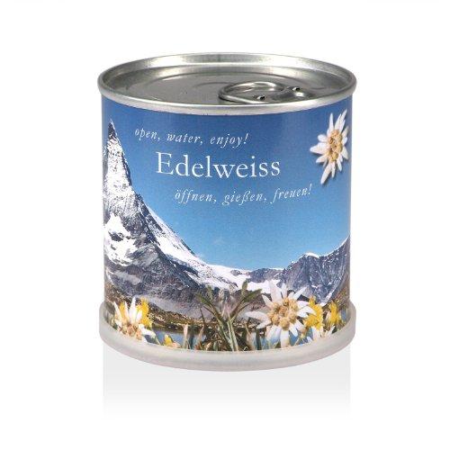 MacFlowers Extragifts Blumen in der Dose - Edelweiss