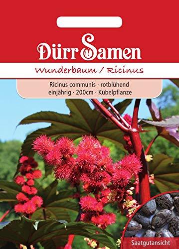 Wunderbaum/Ricinus rot