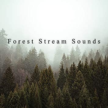 Forest Stream Sounds – Beautiful and Relaxing Nature Melodies for Better Mood, Positive Attitude, Rest, Flora and Fauna
