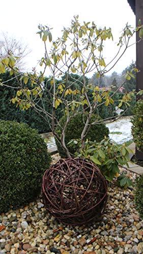 Weidenkugel in 6 Größen, Dekokuge laus Weide Weidenball Gartenkugel Handgefertigt in EU (35cm)