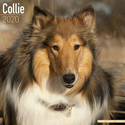 Collie Calendar 2020