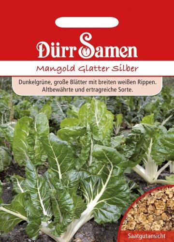 Mangoldsamen - Mangold Glatter Silber von Dürr-Samen