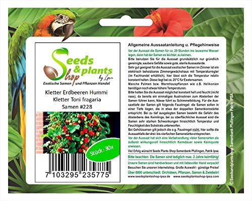 Stk - 30x Kletter Erdbeeren Hummi Toni fragaria Obst Pflanzen - Samen #228 - Seeds Plants Shop Samenbank Pfullingen Patrik Ipsa