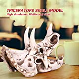 Immagine 2 resina dinosauro triceratops imitazione teschio