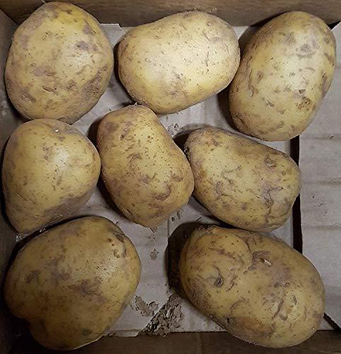 15KG Riesenkartoffeln XXL Griller Naturo Folienkartoffeln je ca. 350-450 Gramm