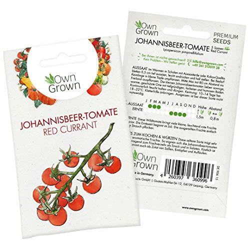 Tomatensamen Red Currant: Premium Mini Tomaten Samen zum Anbau von Tomatenpflanzen, Seltene Tomatensamen der Wildtomate Red Currant für Balkon, Kübel und Garten – 5 Gemüse Samen von OwnGrown