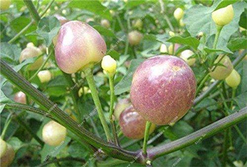 Cerise poivre Graines de légumes jardin Bonsai Chili plantes non-Ogm Jardin Décoration Cuisine Assaisonnement Alimentation 200 Pcs 10