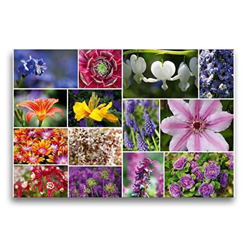 Premium Textil-Leinwand 75 x 50 cm Quer-Format Staudenblumen Collage | Wandbild, HD-Bild auf Keilrahmen, Fertigbild auf hochwertigem Vlies, Leinwanddruck von Martina Cross