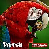 Calendar 2021 Parrots: Cute Parrot Photos Monthly Mini Calendar